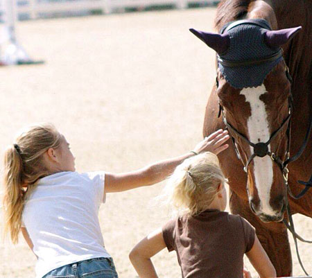 Horse Riding Lessons Learn to Ride Equestrian Riding Camps Academy Riding Lessons Horse Care Equestrian Coaching Stonewood Riding Academy