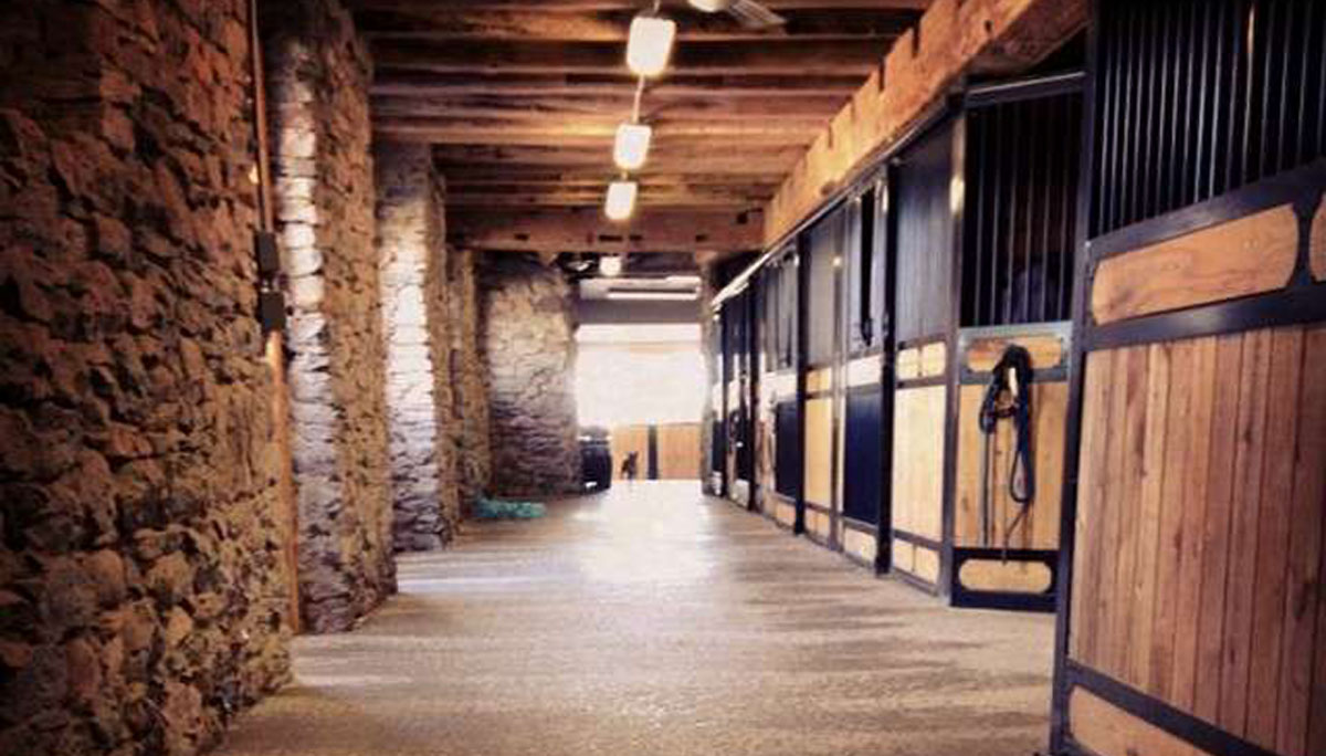 Stonewood Riding Academy offers horseback riding lessons close to Toronto in Pickering